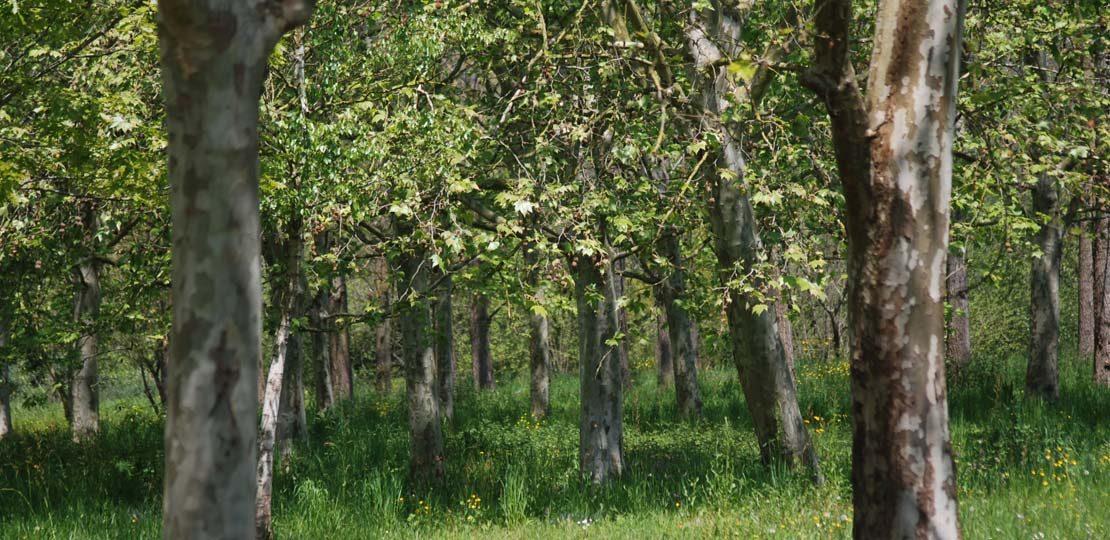 asesoramiento proyectos forestal cantabria