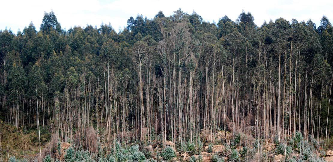 asesoramiento trabajos forestales