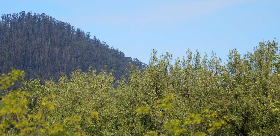 gestion subvenciones tecnico forestal cantabria