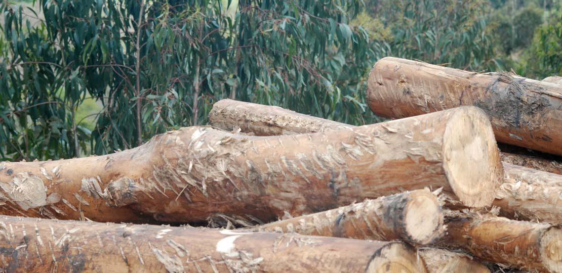 informacion mercado madera