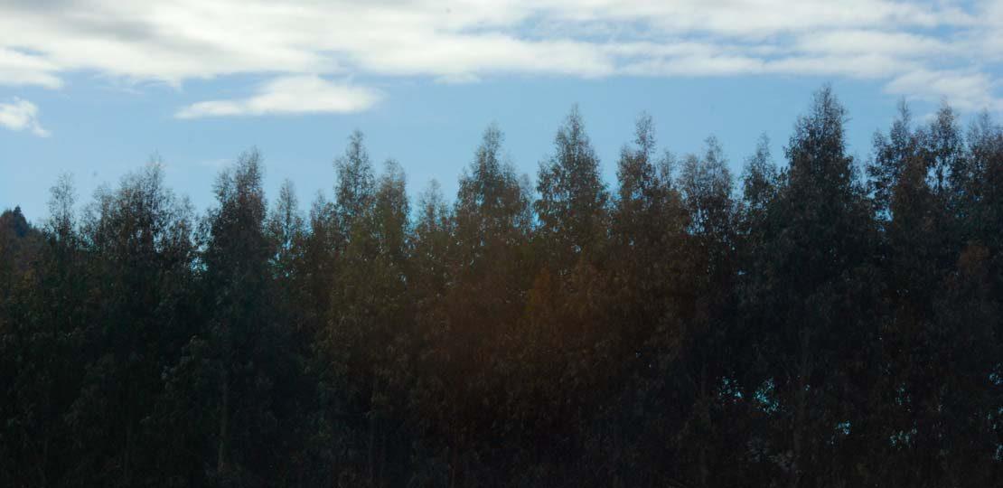 recepcion boletines asociacion forestal