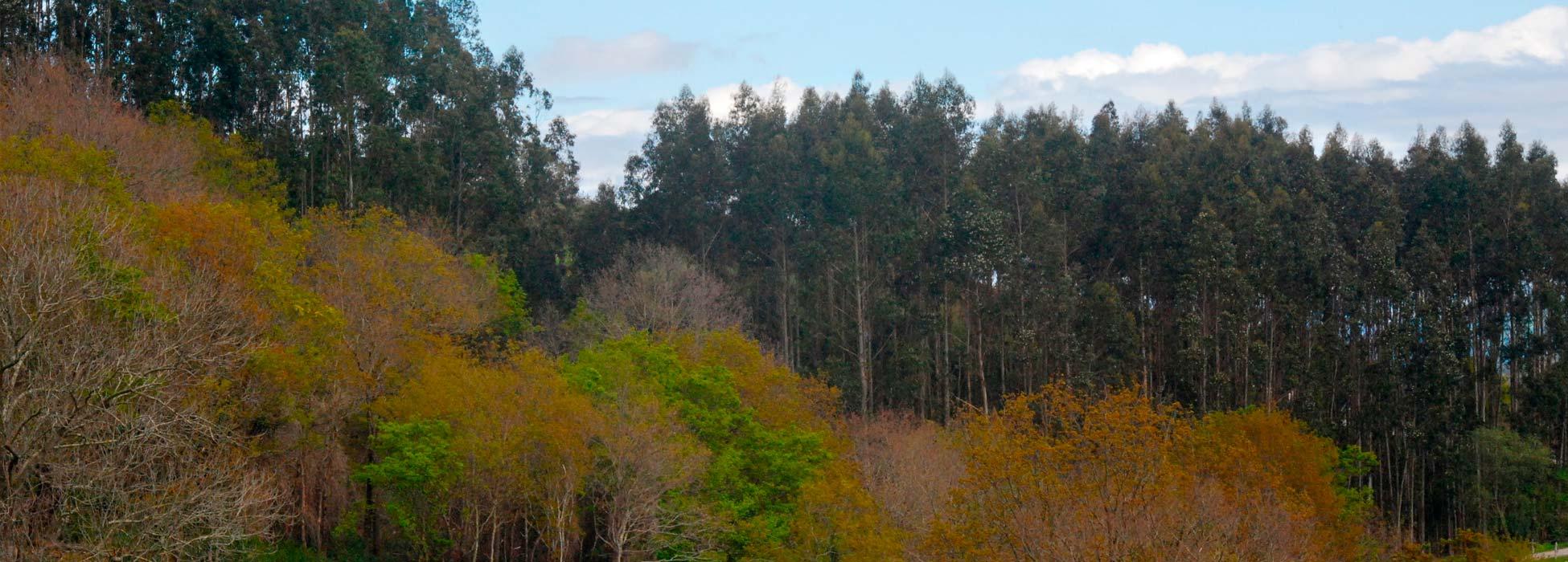 asforcan asociacion forestal de cantabria