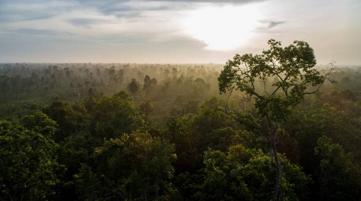 Colocar a los bosques en la agenda mundial es una necesidad urgente